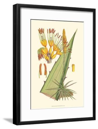 Vibrant Tropicals II-Samuel Curtis-Framed Art Print