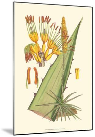 Vibrant Tropicals II-Samuel Curtis-Mounted Art Print