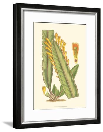 Vibrant Tropicals III-Samuel Curtis-Framed Art Print