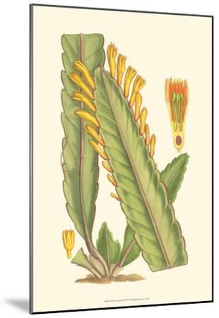 Vibrant Tropicals III-Samuel Curtis-Mounted Art Print