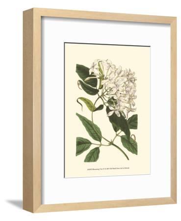 Blossoming Vine IV-Sydenham Teast Edwards-Framed Art Print