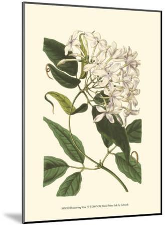 Blossoming Vine IV-Sydenham Teast Edwards-Mounted Art Print