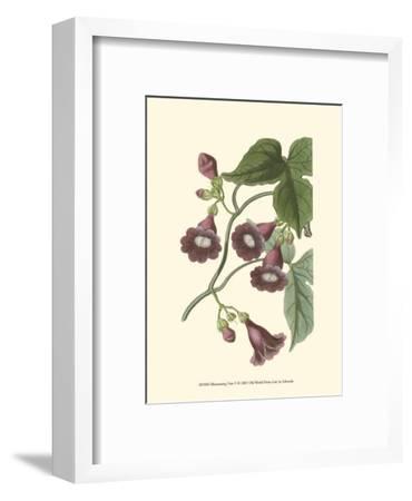 Blossoming Vine V-Sydenham Teast Edwards-Framed Art Print