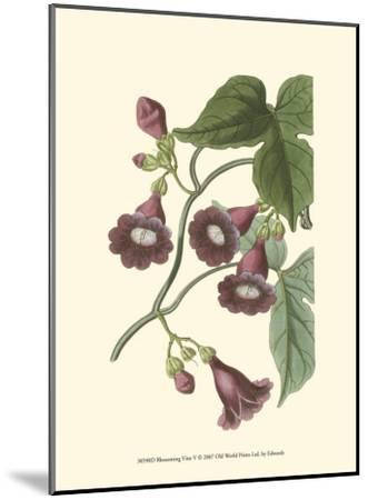 Blossoming Vine V-Sydenham Teast Edwards-Mounted Art Print