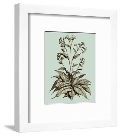 Custom Imperial Munting IV-Abraham Munting-Framed Art Print