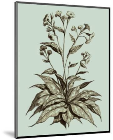 Custom Imperial Munting IV-Abraham Munting-Mounted Art Print