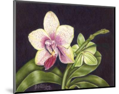 Vibrant Orchid II-Gloria J^ Callahan-Mounted Art Print