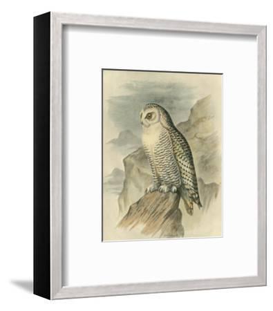 Snowy Owl-F^w^ Frohawk-Framed Art Print