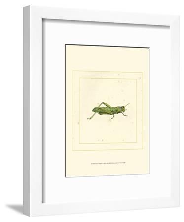 Green Hopper--Framed Art Print