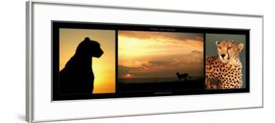 Cheetah at Sunset-Michel & Christine Denis-Huot-Framed Art Print