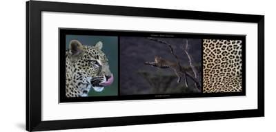 Leopard Resting-Michel & Christine Denis-Huot-Framed Art Print