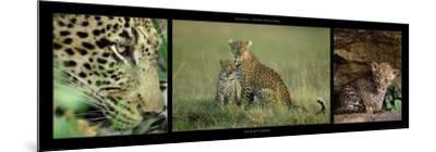 Leopard Family-Michel & Christine Denis-Huot-Mounted Art Print