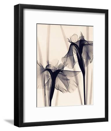 Japanese Iris-Judith Mcmillan-Framed Art Print