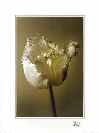 Tulip II-Chris Sands-Framed Art Print