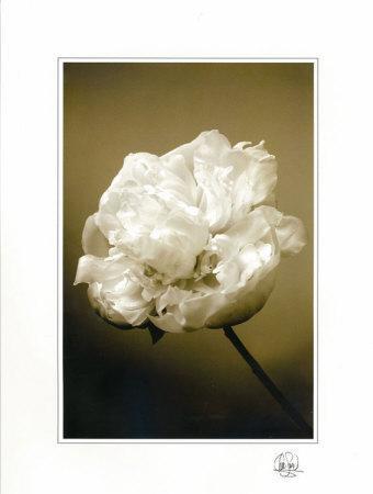Peony II-Chris Sands-Framed Art Print