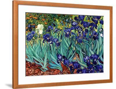 Irises, Saint-Remy, c.1889-Vincent van Gogh-Framed Art Print
