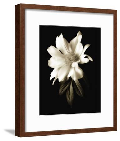 Portrait in White I-John Rehner-Framed Art Print