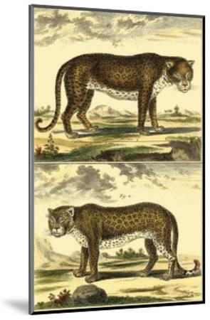 Panther and Leopard-Denis Diderot-Mounted Art Print