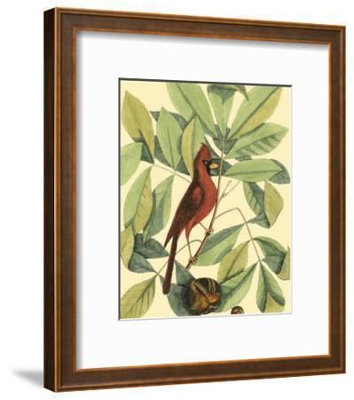 Red Bird and Hiccory Tree-Mark Catesby-Framed Art Print