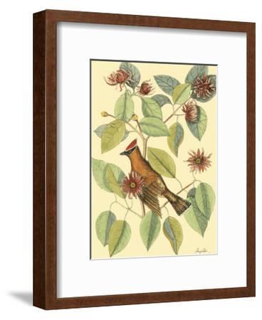 The Chatterer-Mark Catesby-Framed Art Print