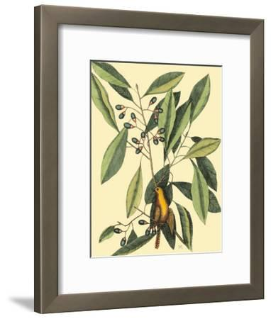 The Carolina Laurus-Mark Catesby-Framed Art Print