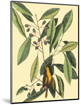The Carolina Laurus-Mark Catesby-Mounted Art Print