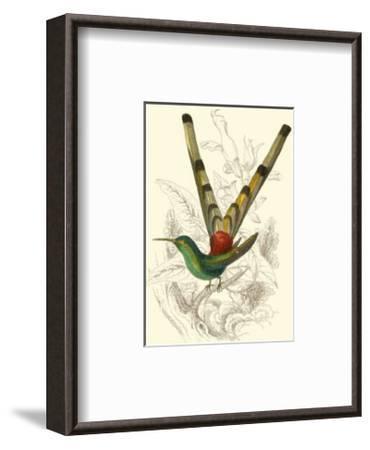 Jardine Hummingbird II-Sir William Jardine-Framed Art Print