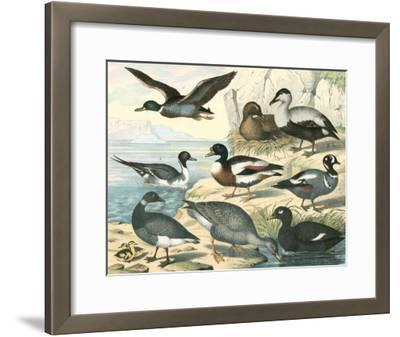 Avian Collection IV--Framed Giclee Print