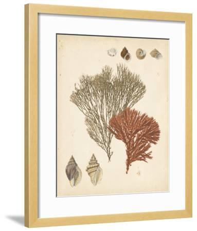 Coastal Relic IV--Framed Giclee Print
