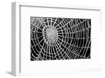 Spider Web Sparkle-erichan-Framed Art Print