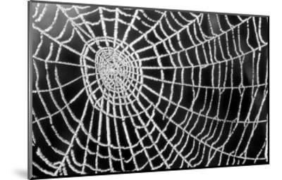 Spider Web Sparkle-erichan-Mounted Art Print