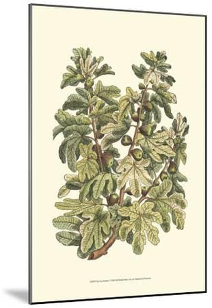 Fig Tree Branch-Henri Du Monceau-Mounted Art Print