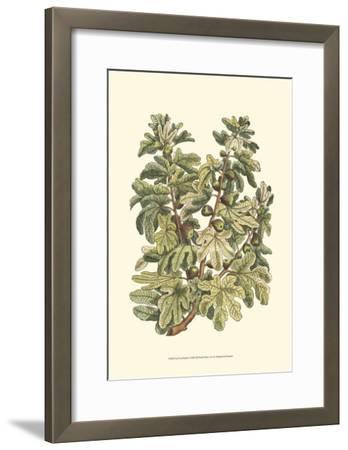 Fig Tree Branch-Henri Du Monceau-Framed Art Print