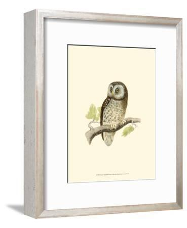 Tengmalm's Owl-Reverend Francis O^ Morris-Framed Art Print