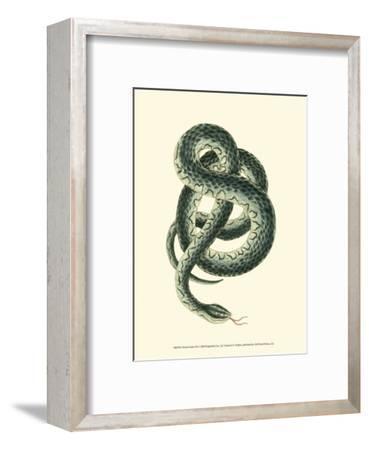 Vibrant Snake III-Frederick P^ Nodder-Framed Art Print