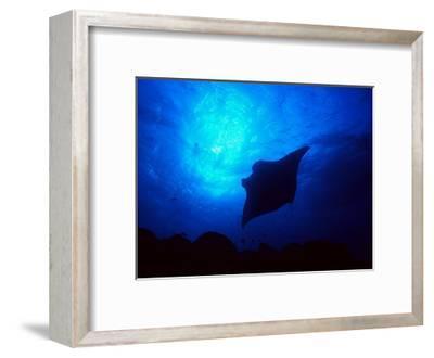 Sea Manta Burst-Charles Glover-Framed Giclee Print