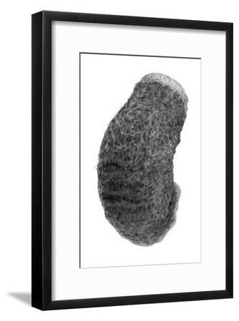 Abstract Black Creature-Ryuichirou Motomura-Framed Art Print