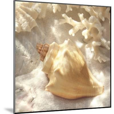 Coral Shell IV-Donna Geissler-Mounted Art Print