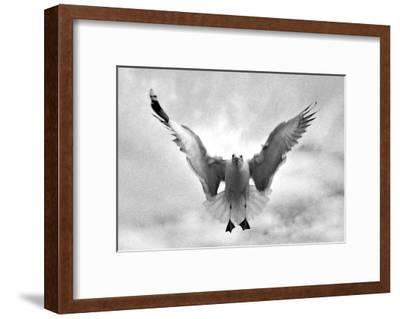 Beach Seagull Landing-Stephen Lebovits-Framed Giclee Print