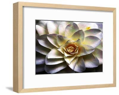 Flower in Full Bloom-Stephen Lebovits-Framed Giclee Print
