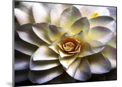 Flower in Full Bloom-Stephen Lebovits-Mounted Giclee Print