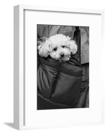Doggy Bag-Stephen Lebovits-Framed Giclee Print