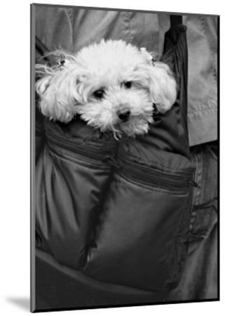 Doggy Bag-Stephen Lebovits-Mounted Giclee Print