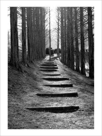 Forest Steps-Stephen Lebovits-Framed Giclee Print