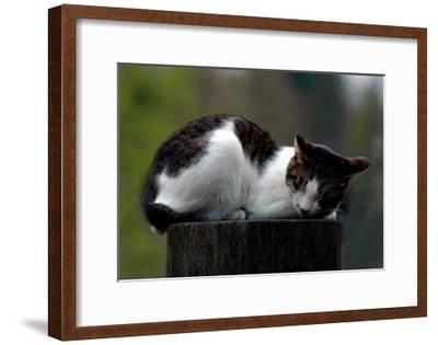 Cat Nap-Stephen Lebovits-Framed Giclee Print