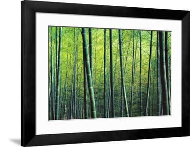 The Bamboo Grove-Robert Churchill-Framed Art Print