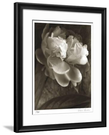 Twilight Peony-Donna Geissler-Framed Giclee Print
