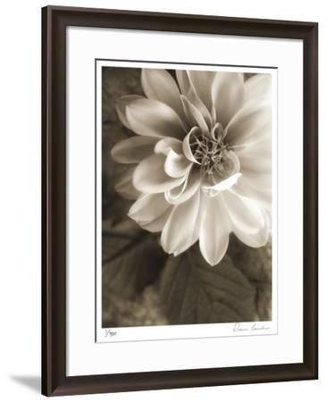 Twilight Dahlia-Donna Geissler-Framed Giclee Print