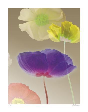 Poppy Suite III-Robert Mertens-Framed Giclee Print