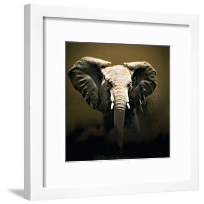 On Safari-Bobbie Goodrich-Framed Art Print